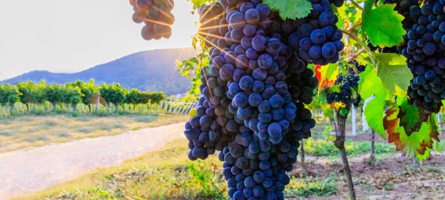 Här bor ni omgivna av regionens vackra vinodlingar som ni ser från hotellets terrass