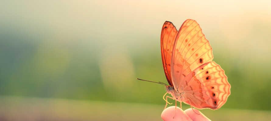 Besøg sommerfugle parken, Alaris, som huser mere end 700 sommerfugle samt flere andre dyrearter som f.eks. dværgsilkeaber.