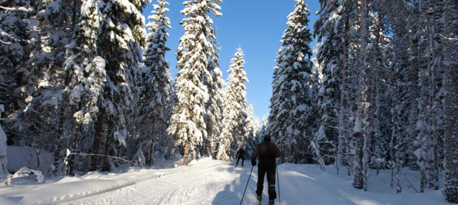 Om vinteren kan I stå på ski i det omkringliggende område .
