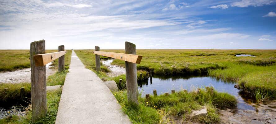 Erleben Sie das Naturwunder Wattenmeer – nur wenige Autominuten vom Hotel entfernt.
