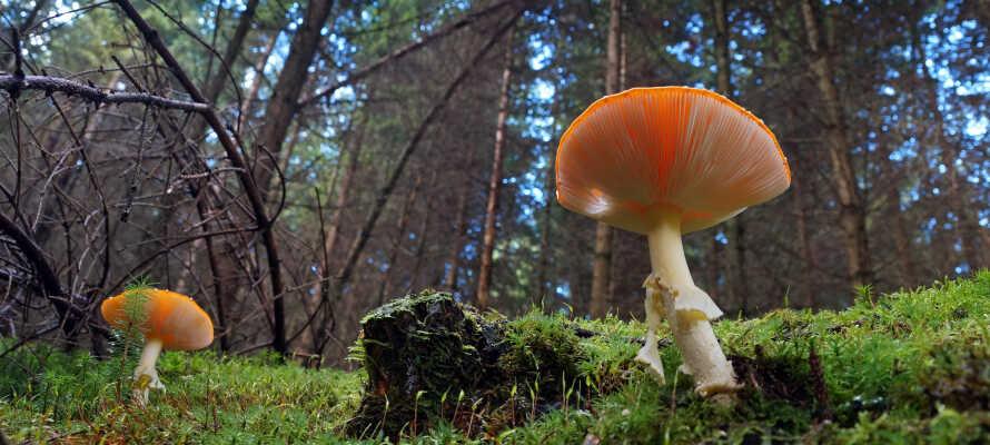 Här bor ni endast ett stenkast bort från den vackra och rogivande skogsnaturen.