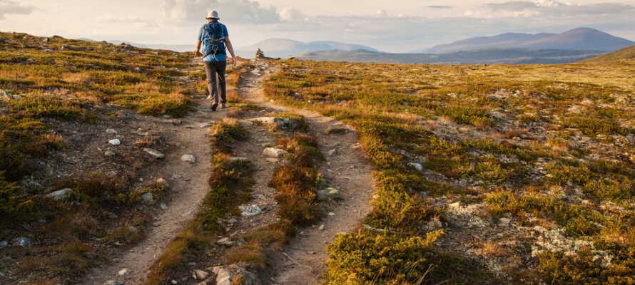 Det finns många vandringsleder i området där ni kan promenera och andas in den friska luften.