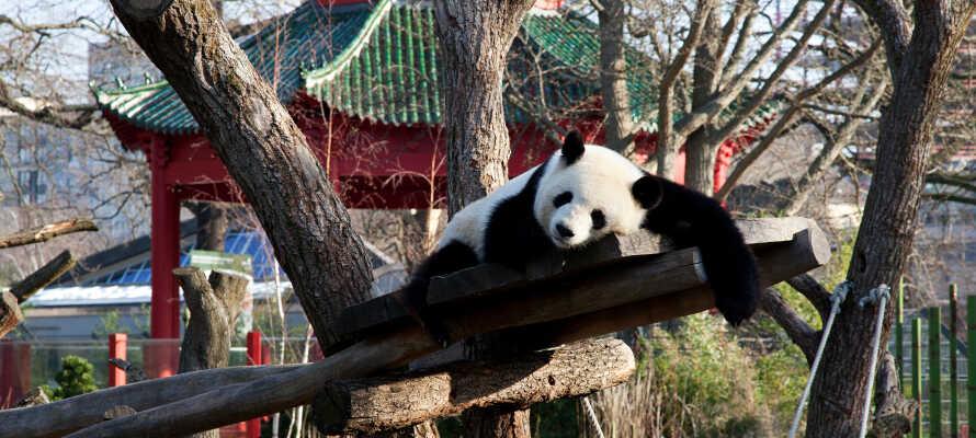 Besøg Berlin Zoo, som er et oplagt besøgsmål for både store og små dyrevenner.