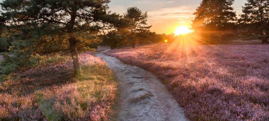 Utforsk det vakre naturområdet Lüneburger Heide, ideelt for hyggelige gå- og sykkelturer.