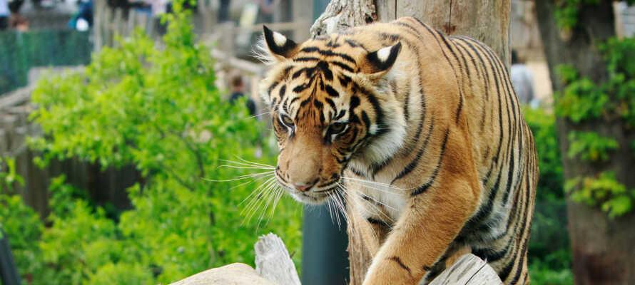 Der Zoo von Boras bietet jede Menge Spaß für die ganze Familie.