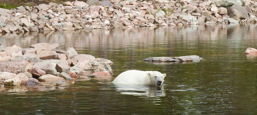 Machen Sie unbedingt einen Familienausflug zum Orsa-Raubtierpark!