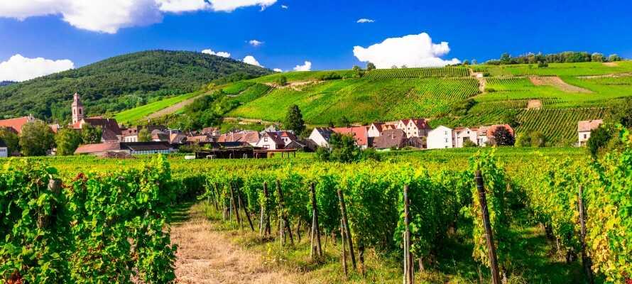 I bor i naturskønne omgivelser, ved foden af Château du Haut-Koenigsbourg, og har adskillige historiske seværdigheder indenfor kort afstand.