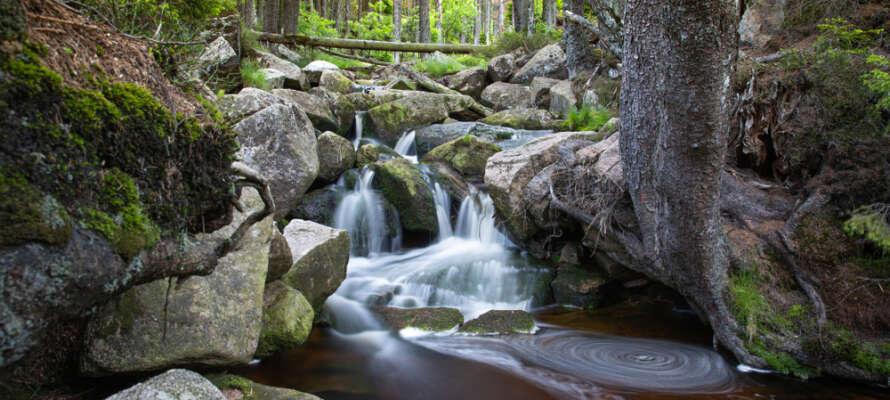 Rett ved naturen med gode vandemuligheter rett ved hotellet.