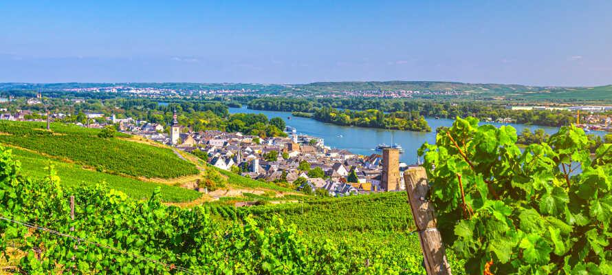 Utforska och upplev de vackra vingårdarna, endast en kort promenad från floden Rhen.