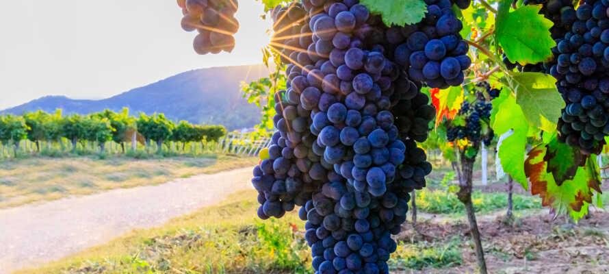 Smaka på flera utsökta viner från hotellets vinotek eller boka PLUS-paketet som inkluderar en 4-rätters meny med utvalda viner.