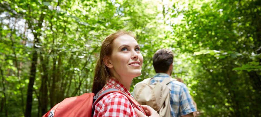 Naturen rundt Moselelven er perfekt for en aktiv ferie med gå- og sykkelturer, hvor dere kan utforske de idylliske omgivelsene i 'Baybachtal'.