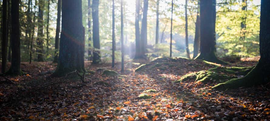 Hotellet ligger i naturskjønne omgivelser og tilbyr et godt utgangspunkt for vakre tur- og sykkelturer i bøkeskogene.