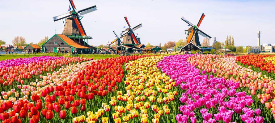 Dere bor tett på det herlige Zaanse Schans-området, som preges av tulipanmarker, vindmøller og velbevarte bygninger.