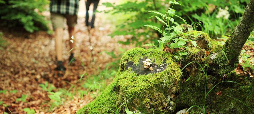 De naturskjønne omgivelsene omkring Mälaren, innbyr til noen hyggelige gåturer.