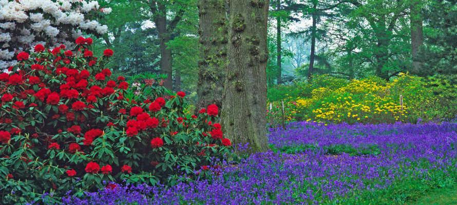 Gå en tur mellem de smukke blomster i Rhododendrondalen, som er byens stolthed.