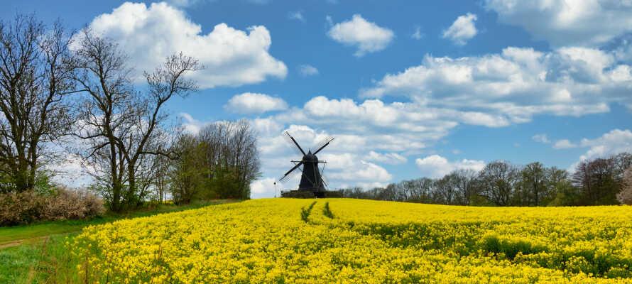 Erleben Sie die gelben Rapsfelder, die sowohl die Umgebung von Lund als auch die übrige Landschaft von Schonen prägen.