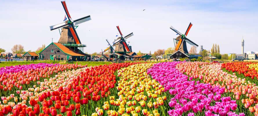 Dra på spennende utflukter og besøk f.eks. verdens største blomsterpark, Keukenhof.