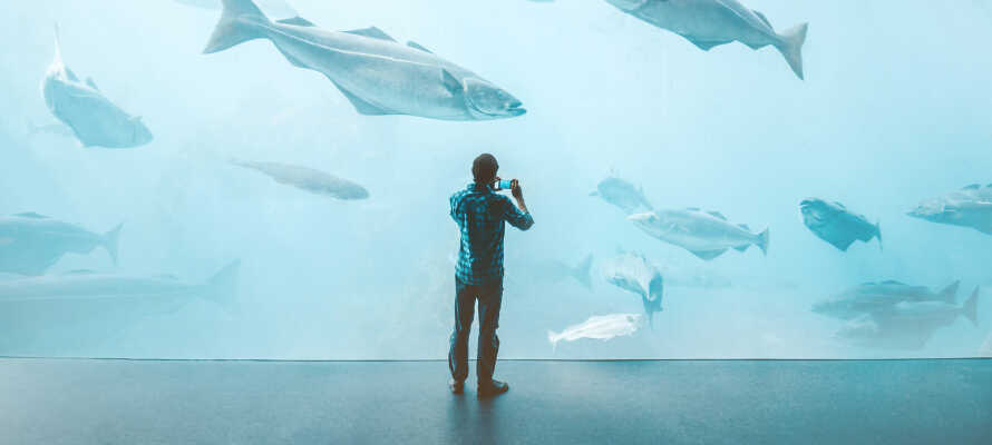 Det er mange forskjellige severdigheter i nærheten - besøk f.eks. Atlanterhavsparken, som er et av Nord-Europas største saltvannsakvarium.