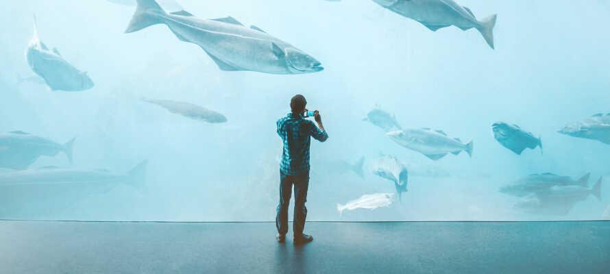 Ni hittar många sevärdheter och aktiviteter i närheten som Atlanterhavsparken, som är en av norra Europas största saltvattensakvarier