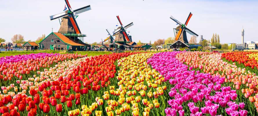 Hotellet har en suveren beliggenhet,  nær den berømte tulipanparken Keukenhof.