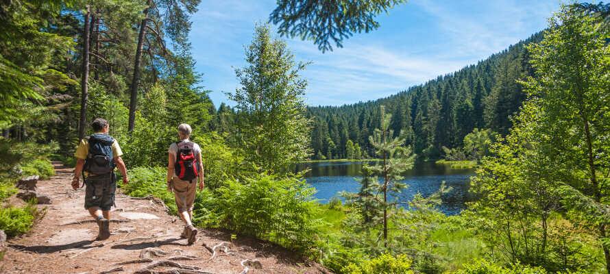Utforsk Schwarzwald-regionen, kjent for sin fantastiske natur og sine gjøkur.