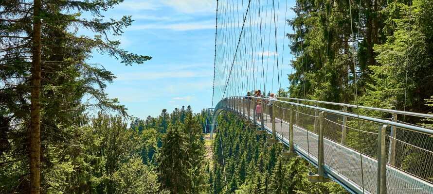 Ta en tur 20 meter over skogbunnen i Schwarzwald med en utflukt til Baumwipfelpfad i Bad Wildbad.