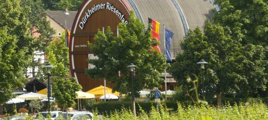 Besuchen Sie die Weinstube Dürkheimer Riesenfass, eine Weinlounge, die im angeblich größten Fass der Welt eingerichtet ist. Photo: Duerkheimer Riesenfass(©)Gerrit Altes_Medien_Datenbank