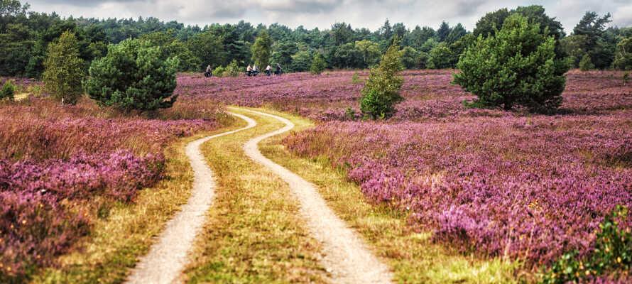 Hotellet ligger en kort køretur fra de smukke hedelandskaber i Lüneburger Heide.