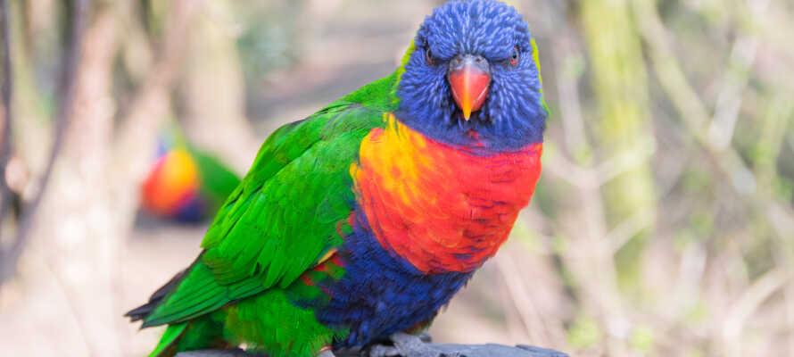 Besøg verdens største fuglepark, Weltvogelpark Walsrode, som ligger indenfor en overskuelig køretur.