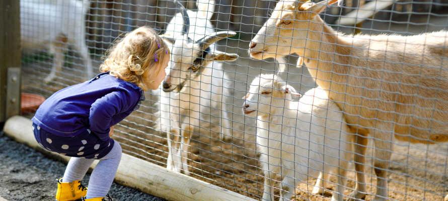 Vom Hotel ist es nicht weit zum Jyllands Park Zoo, der ein großartiges Ziel für Familien mit Kindern ist.