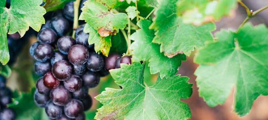 Placeringen midt i en af Tysklands smukkeste vinregioner gør hotellet ideelt for vinelskere- og interesserede.