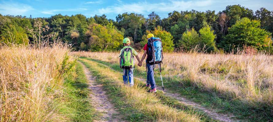 Dra på oppdagelsesferd i regionens skjønne natur, f.eks. med en gåtur rundt sjøen eller en utflukt til Lüneburger Heide.