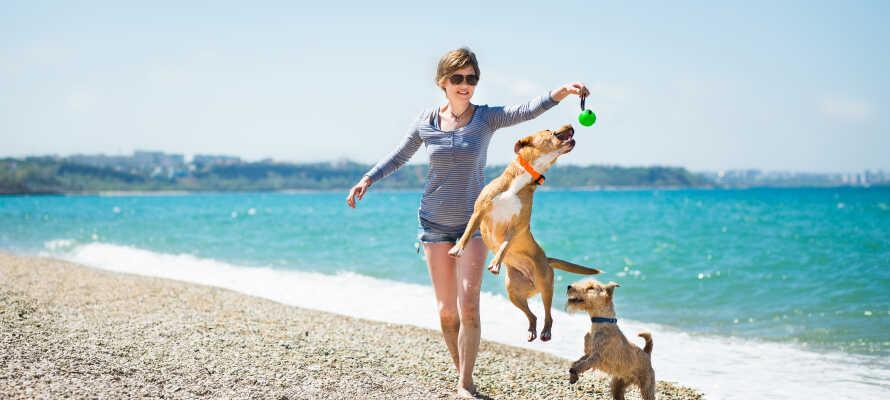 Hundar är välkomna på hotellet och det finns till och med en hundvänlig strand i närheten