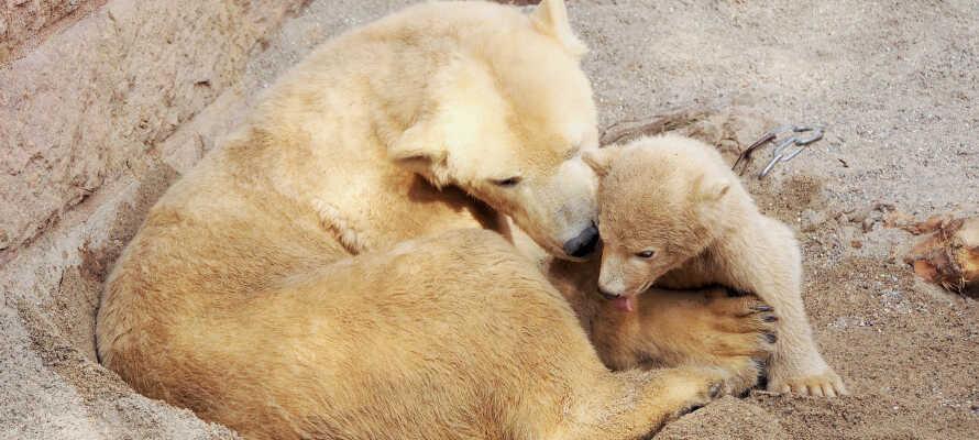 Besøk den historiske zoologiske hagen i Rostock, som er spesielt kjent for sitt 'Darwineum' og sitt flotte isbjørnanlegget.