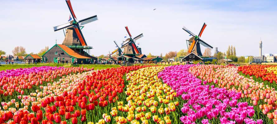 Udforsk Amsterdam eller drag ud i de omkringliggende landskaber, og besøg f.eks. blomsterparken Keukenhof.