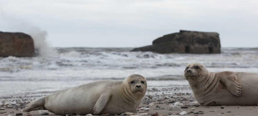Beliggende i unik dansk natur rett ved Vesterhavet i Nationalpark Thy.