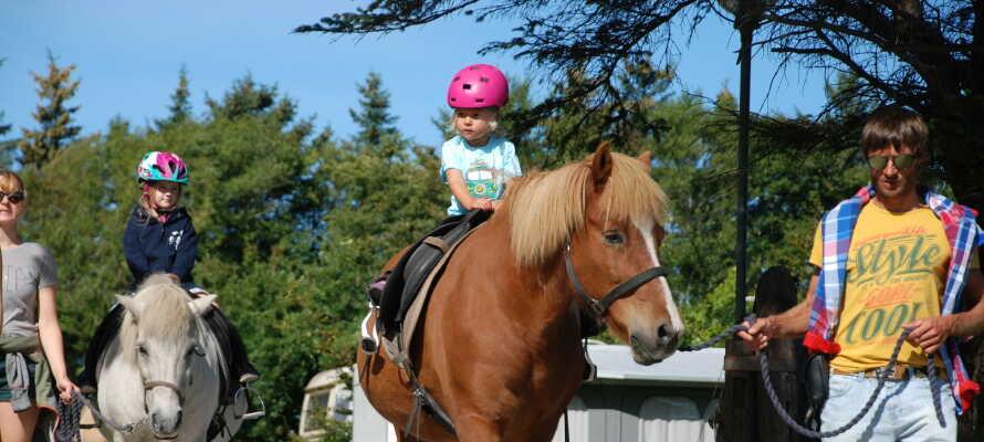 Egen stald med islandske heste, der tilbyder rideture- og -ferier.