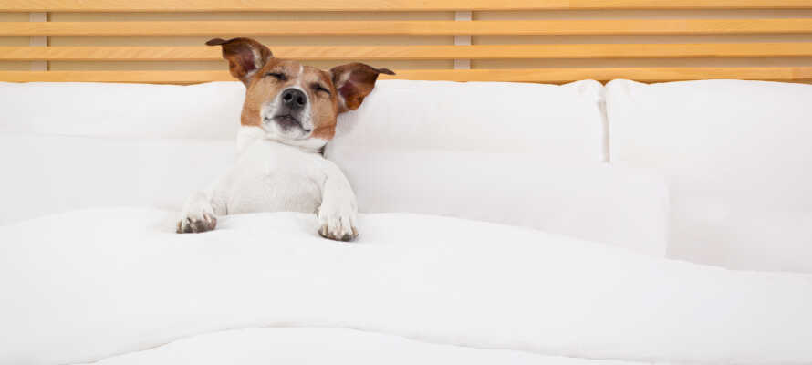 Det er tilladt at medbringe kæledyr på hotellet, så I er fri for at tænke i pasning og pensioner.