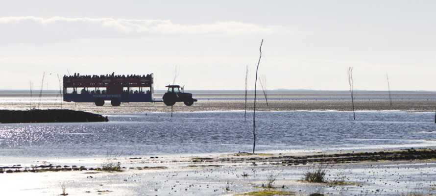 Utforska UNESCO-listade Nationalpark Vadehavet som bjuder på naturupplevelser året runt.