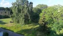 Gå dejlige ture i de grønne omgivelser.