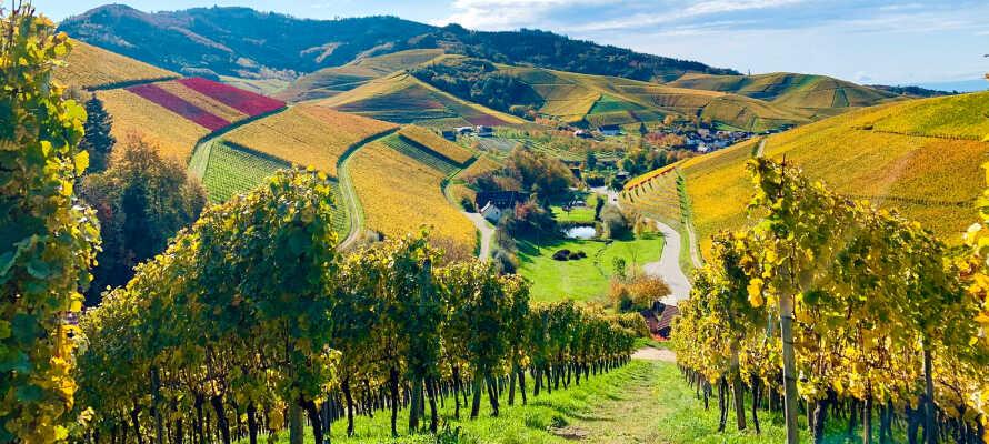 Oberkirch ligger tæt på vinregionen, Ortenau, mellem Strasbourg og Schwarzwald.