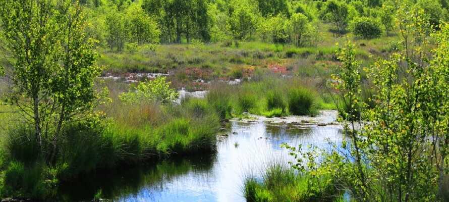 Emsland regionen er kendt for den vidunderlige og meget varierede natur, der indbyder til cykel- og gåture.
