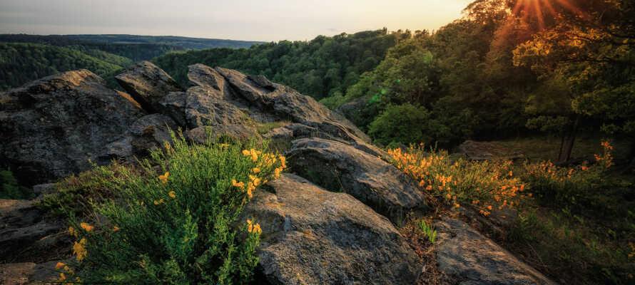 Opplev den enestående naturen i Nasjonalpark Harz, hvor dere kan dra på gåturer og komme tett på naturen